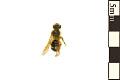 View Mining Bee digital asset number 0