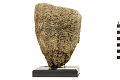 View Vase Sponge digital asset number 0