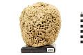 View Wool Sponge digital asset number 0