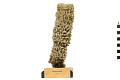 View Azure Vase Sponge digital asset number 0