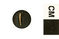 View Foram, Foraminifera digital asset number 0