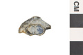 View Fossil Ray-finned Fish digital asset number 0