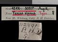 View Tamias alpinus Merriam, 1893 digital asset number 0