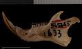 View Tamias striatus doorsiensis Long, 1971 digital asset number 3
