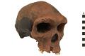 View Kabwe 1, Fossil Hominid digital asset number 0