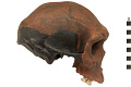 View Kabwe 1, Fossil Hominid digital asset number 1