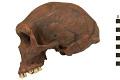 View Kabwe 1, Fossil Hominid digital asset number 2
