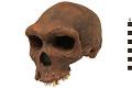 View Kabwe 1, Fossil Hominid digital asset number 3