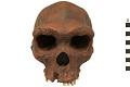 View Kabwe 1, Fossil Hominid digital asset number 4