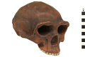 View Zhoukoudian, Early Human, Fossil Hominid digital asset number 0