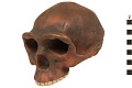View Zhoukoudian, Early Human, Fossil Hominid digital asset number 3