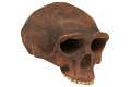 View Zhoukoudian, Early Human, Fossil Hominid digital asset number 6