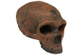View La Chapelle-aux-Saints, Neanderthal Man, Fossil Hominid digital asset number 6