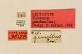 View Xylotrechus gemellus Casey, 1893 digital asset number 0