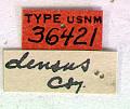 View Prionus (Prionellus) densus Casey, 1924 digital asset number 1