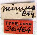 View Prionus (Neopolyarthron) mimus Casey, 1912 digital asset number 1