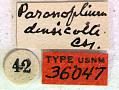 View Paranoplium densicolle Casey, 1924 digital asset number 1