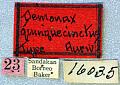 View Demonax quinquecinctus Aurivillius, 1922 digital asset number 1