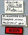 View Compsa nivea Martins, 1962 digital asset number 1