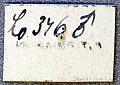 View Compsa nivea Martins, 1962 digital asset number 2
