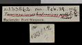 View Tamiasciurus hudsonicus preblei Howell, 1936 digital asset number 0