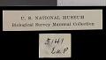 View Tamiasciurus hudsonicus preblei Howell, 1936 digital asset number 1