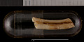 View Cratogeomys castanops excelsus Nelson & Goldman, 1934 digital asset number 3