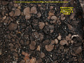View Dermatocarpon polyphyllizum (Nyl.) Blomb. & Forssell digital asset number 1