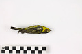 View Cape May Warbler, Cape May Warbler digital asset number 1