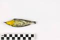 View Blackburnian Warbler, Blackburnian Warbler digital asset number 2