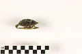 View Eastern Painted Turtle digital asset number 3