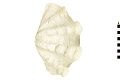 View Fluted Giant Clam digital asset number 0