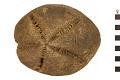 View Sea Urchin digital asset number 0