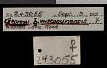 View Geomys bursarius wisconsinensis Jackson, 1957 digital asset number 0