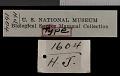 View Geomys bursarius wisconsinensis Jackson, 1957 digital asset number 1