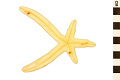 View Sea Star digital asset number 1