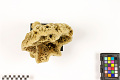View Commercial Sponge digital asset number 4