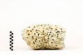 View Deep-sea Sponge digital asset number 1