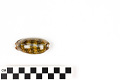 View Little Deer Cowrie, Panamanian Deer Cowrie, Panamanian Deer Cowrie digital asset number 6