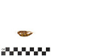 View Little Deer Cowrie, Panamanian Deer Cowrie, Panamanian Deer Cowrie digital asset number 15