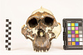 View OH 5, Fossil Hominid digital asset number 5