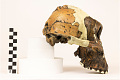 View OH 5, Fossil Hominid digital asset number 3