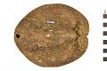 View Sea Urchin digital asset number 1