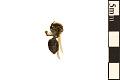 View Mining Bee digital asset number 1