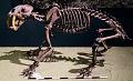 View Smilodon californicus digital asset number 3