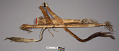 View Bow And Case, Quiver And 31 Arrows digital asset number 2