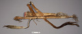 View Bow And Case, Quiver And 31 Arrows digital asset number 0
