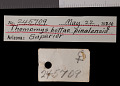 View Thomomys bottae pinalensis Goldman, 1938 digital asset number 0