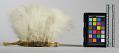 View Head Dress Feather (Du Ku) digital asset number 2