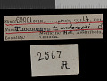 View Thomomys talpoides andersoni Goldman, 1939 digital asset number 0